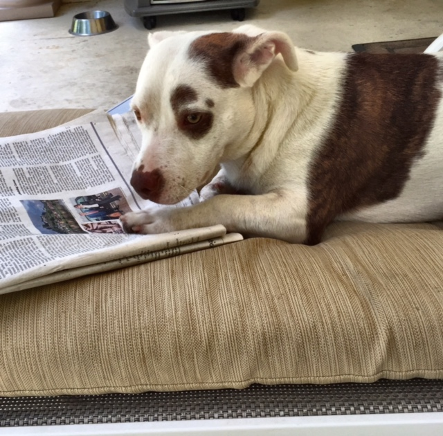 Wyatt and the newspaper