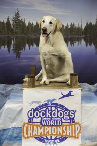 Waggleview® with Beth Sausville, President of Green Mountain Dockdogs